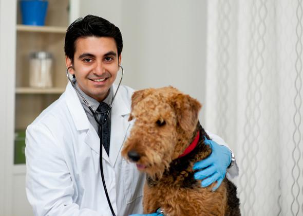 Doctor Jacob Hawthorne veterinarian
