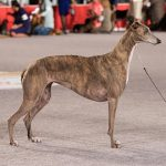 Best Dog Food For Greyhounds