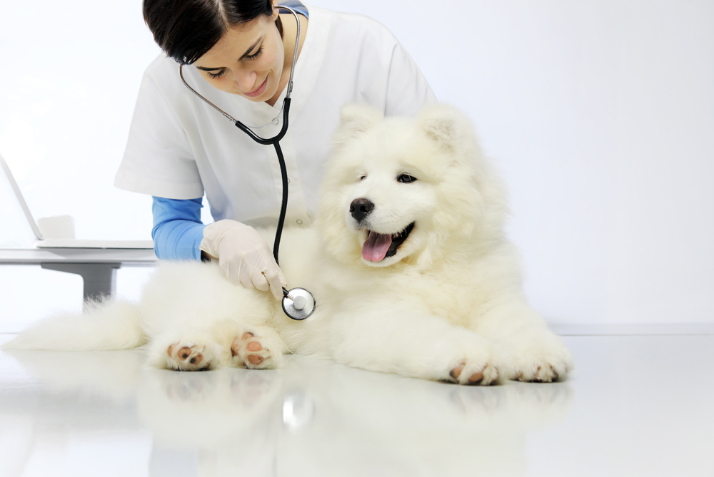 dog wellness and feeding guide