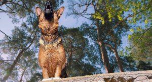stop a german shepherd from howling