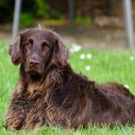 What You Should Know About Allergies in Dogs